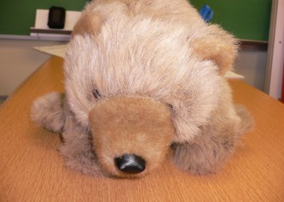 CCR001629 Grizzlycub Pupp