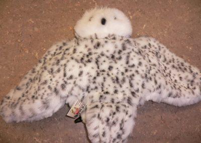 CCR001645 Snowy Owl Pupp