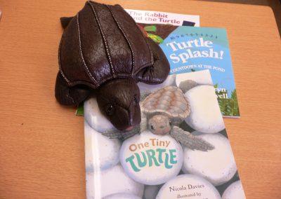 CCR001850 Turtle Kit