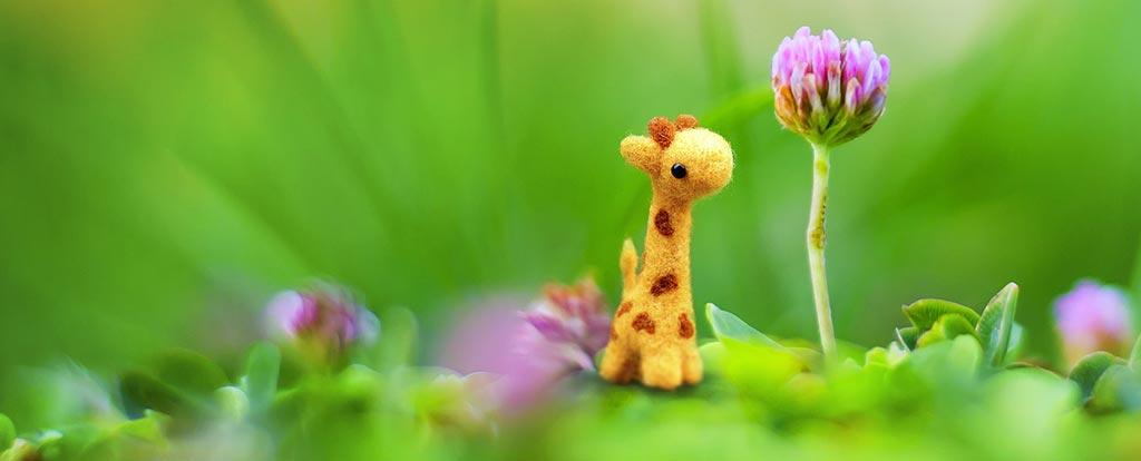 Child Care Resource and Referral - Giraffe