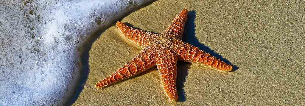 Fetal Alcohol Spectrum Disorder (FASD) Keyworker - Starfish