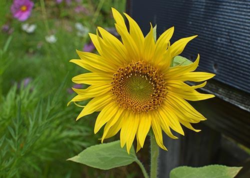 Contact Shuswap Children's Association - Sunflower
